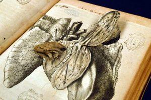 R. Descartes, De homine figuris, Leida, F.Moyardum & P. Leffen, 1662 (Biblioteca Nazionale Centrale di Roma).